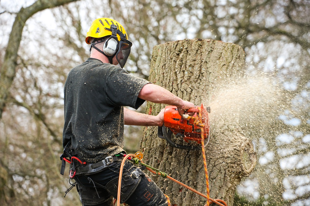 tree-surgeons-Harrow